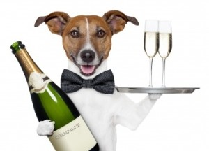 dog-toasting-the-new-year